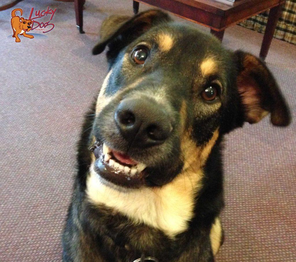Asheville Dog Training - Archie Logo