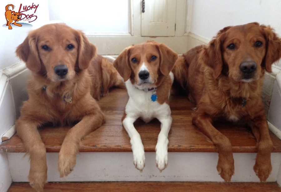 Asheville Dog Training - Fitness Motivation