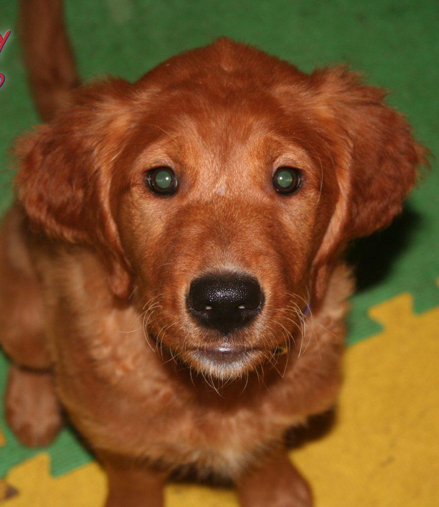 Calypso Dog Training Asheville