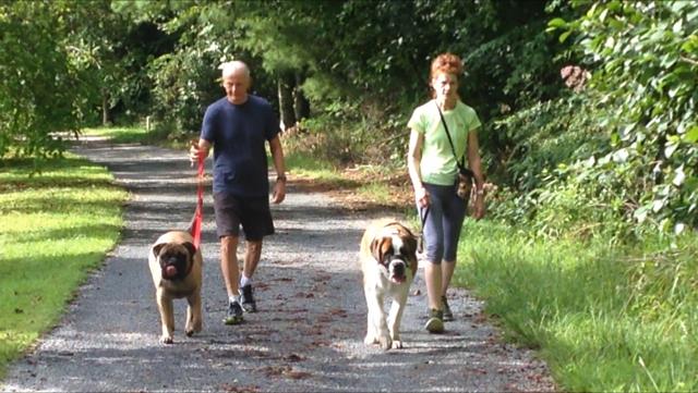 Dog Training Asheville - Dog's Perspective 1