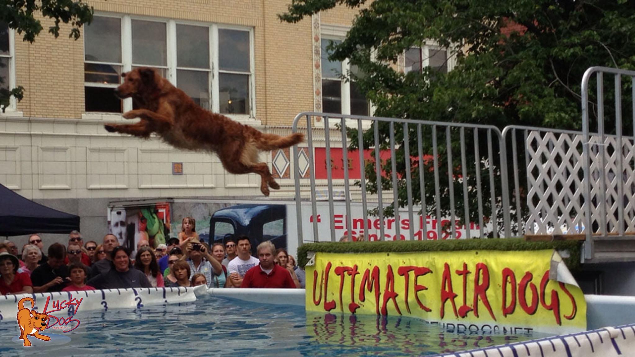 Dog Training Dock Diving Asheville
